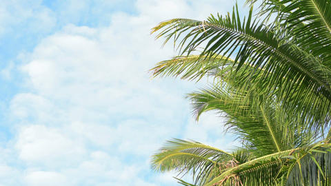 Palm trees fronds swaying on sky background Footage
