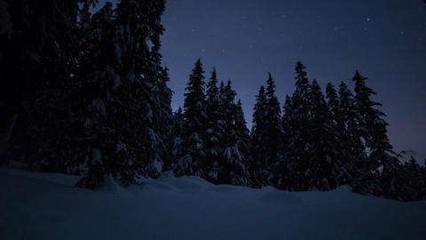 Night Sky In A Snowy Forest stock footage