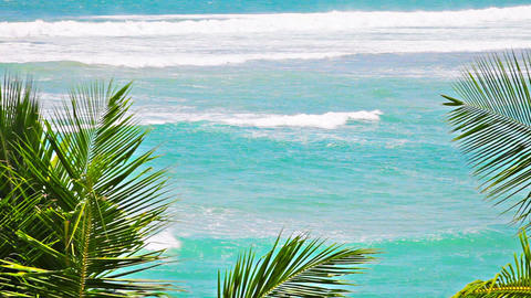 Rough sea and palms fronds Footage