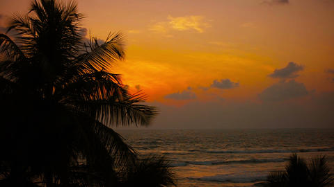Tropical coast at sunset. Palm trees swaying in th Footage