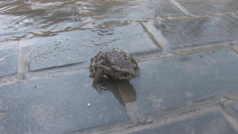 Frog Stock Video Footage