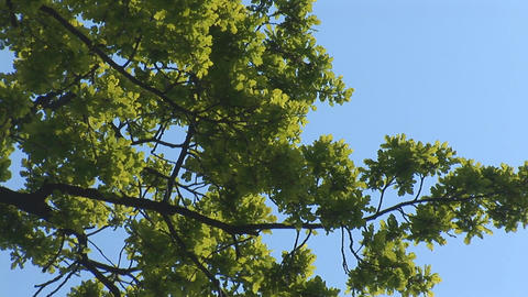 green tree 2 Stock Video Footage