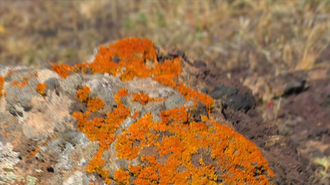 lady beetle and microbes on dead vulcan area Stock Video Footage