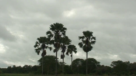 Malawi: palm trees, shot from moving boat Footage
