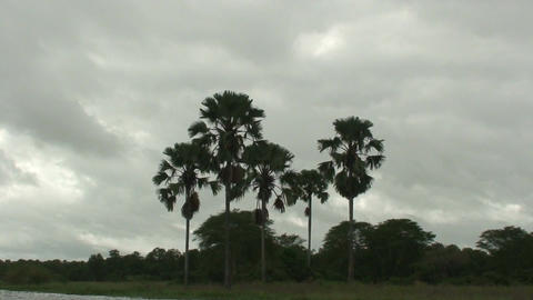 Malawi: palm trees, shot from moving boat Stock Video Footage