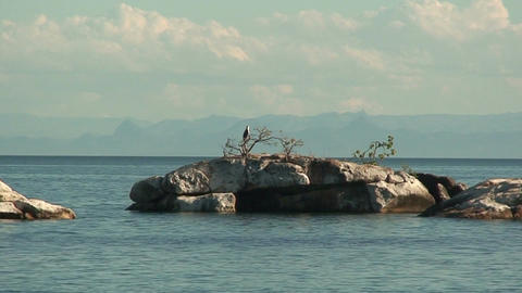 Malawi: eagle on a rock 2 Stock Video Footage