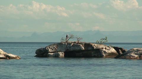 Malawi: eagle on a rock 2 Live Action