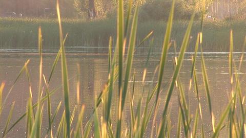 lake 2 Footage