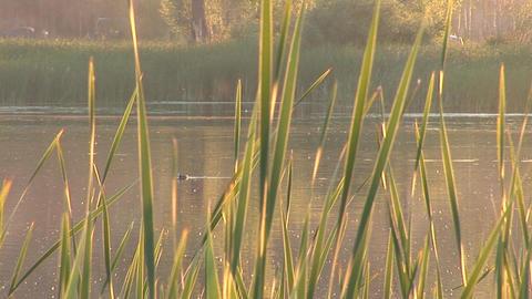 lake 2 Stock Video Footage