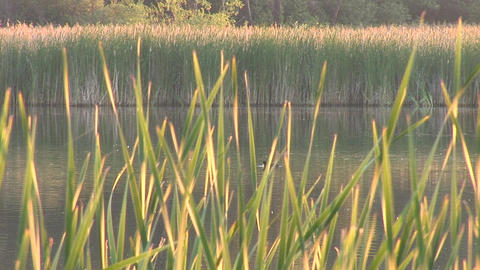 lake 3 Stock Video Footage