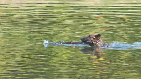 water dog 2 Stock Video Footage