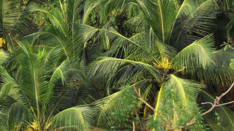 tropical forest Stock Video Footage