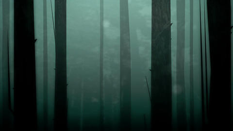 Spooky Forest Loop HD Stock Video Footage