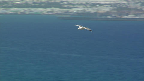 elegant seagull fly by close Stock Video Footage