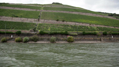 Plantations near the Rhine river 1 Footage