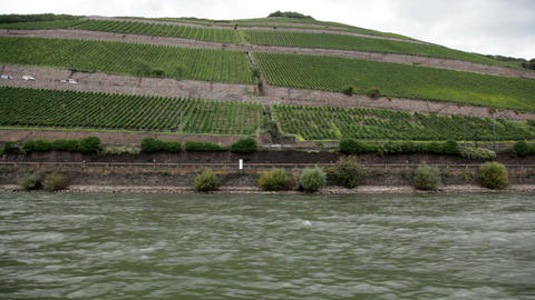 Plantations near the Rhine river 1 Stock Video Footage