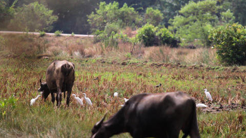 Bull in the Park Stock Video Footage