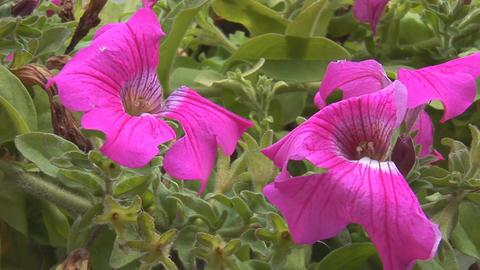flowers 2 Stock Video Footage