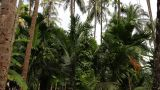 Tropical Forest stock footage