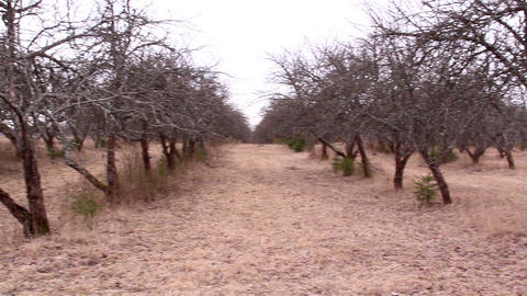 Lots of withered apple tree from a garden Footage