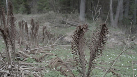 Couple of old ferns on the forest Footage