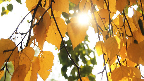 Autumn Leafs stock footage
