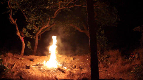 bright fire in forest Footage