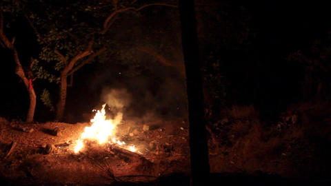 bright fire in forest Stock Video Footage