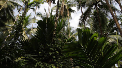 tropical forest Footage