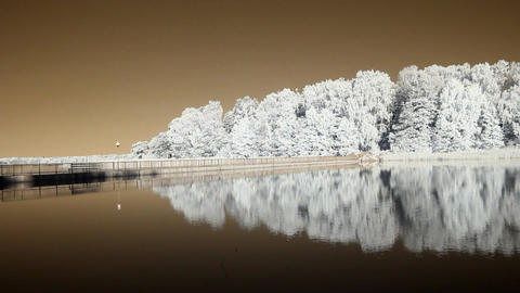 Infrared flora: reflections of trees in a water 1 Stock Video Footage