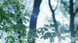 Beautiful Backlit Leaves stock footage