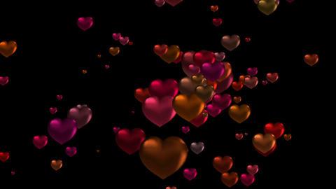 HeartDOG73497 Stock Video Footage