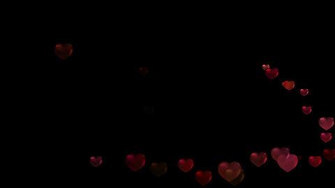 HeartDOG73499 Stock Video Footage