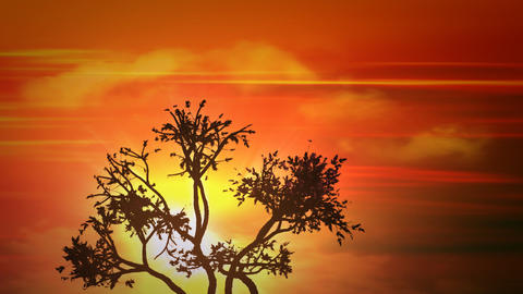 africa sunset tree Animation
