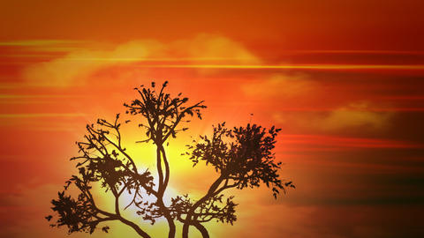africa sunset tree Stock Video Footage