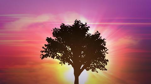 sunrise big tree growth Stock Video Footage