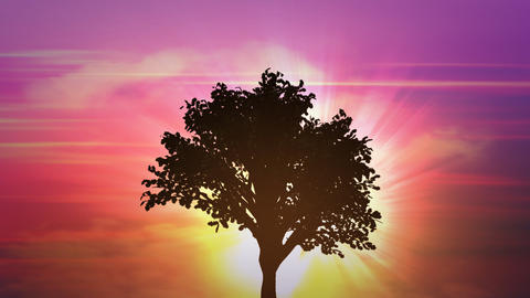 sunrise big tree growth Animation