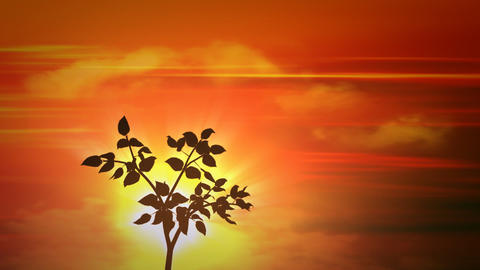 sunset small tree Stock Video Footage