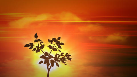 sunset small tree Animation