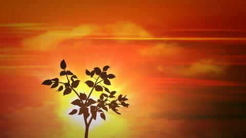 sunset small tree Stock Video Footage