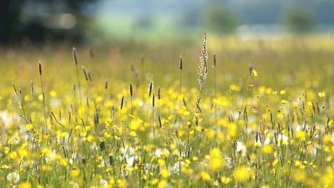 Flower Meadow Stock Video Footage