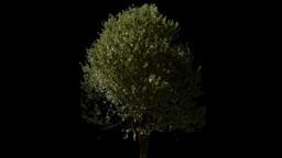tree 03 Footage