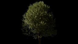 tree 03 Stock Video Footage