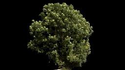 tree 05 Footage