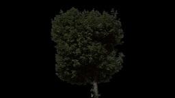 tree 28 Stock Video Footage