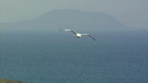 elegant seagull fly Stock Video Footage
