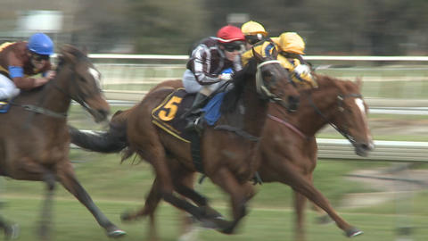race horses slow motion Stock Video Footage