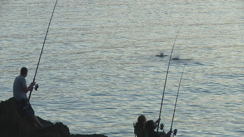 rods and jumping fish closer Footage