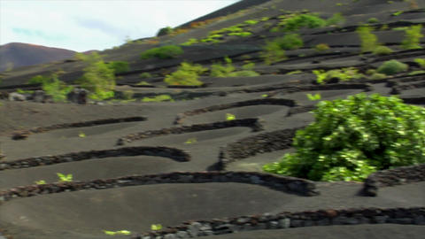 volcanic wine growing region Stock Video Footage