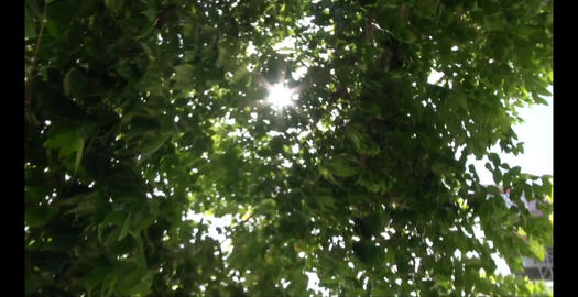 Sparkle in the Leaves Stock Video Footage